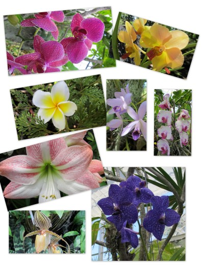 2011 Hawaii Orchids